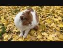 のら猫とイチョウのじゅうたん