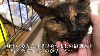 世界の片隅で鳴いていた猫、闇夜の中で保護される