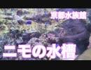 ニモみたい!京都水族館の水槽