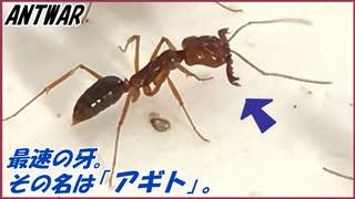 生物界最速の牙を持つアギトアリ【新蟻導入】