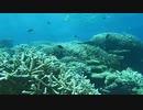 [グレートネイチャー] エメラルドグリーンの海に浮かぶ純白の島・誕生の秘密 | モルディブ | NHK