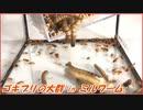 大量のゴキブリに大量のミルワームを与えたら、たくさん食べた。