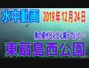 水中動画(2019年12月24日)in 東扇島西公園