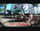 【ゆっくり】時雨梓の島猫レポート Vol.04【旅動画】