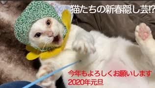 珍妙猫たち、2020年新春の縁起物を披露する