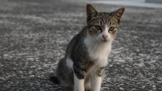 【ゆっくり】時雨梓の島猫レポート Vol.05【旅動画】
