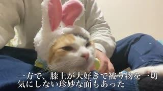 てんかん持ちのオス三毛猫、投薬と療養を