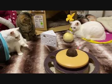 アメリカからやってきた猫おもちゃ、珍妙な猫たちを怯ませる