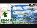 第55位:冬眠中の蟻の巣に、別種のアリが侵入してきたら【前編】
