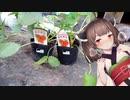 【VOICEROID栽培】へにょきり菜園 冬休み編 (2/3)