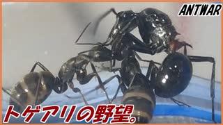 敵のアリの巣を乗っ取りたいトゲアリ~ならず者の野望~【後編】