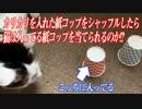 紙コップをシャッフルしたらカリカリが入ってる方を猫は当てられるか!?