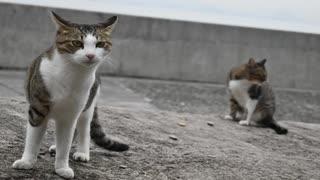 【ゆっくり】時雨梓の島猫レポート Vol.07【旅動画】