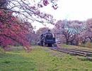 【東方アレンジ】Waldreben ~ 風の花束【悠久の蒸気機関】