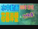 水中動画(2020年1月9日)in 花暮岸壁