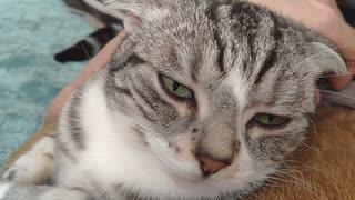 撫でるの止めると怒ってくる猫