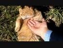猫に「手を舐めていいんだよ~」と差し出してみた(´・ω・)っ