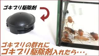 ゴキブリの群れの中に「ゴキブリ駆除剤」を入れたら凄まじい結果になった。