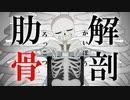 【音MAD】肋骨解剖【手描きUndertale】