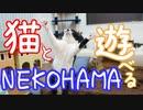 猫と遊べる穴場スポット! 保護猫スペース『NEKOHAMA』
