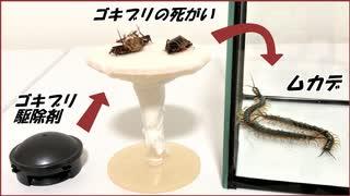 ムカデの群れの中に「ゴキブリ駆除剤」を食べたゴキブリを入れたらさらに凄まじい結果になった。
