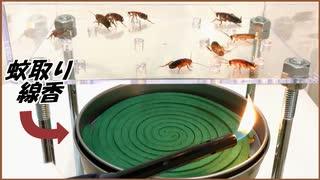 大量のゴキブリを「蚊取り線香」で燻したら想像以上の結果になった。