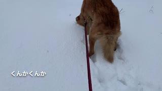 雪の感触にハマった犬