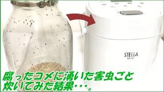 お米に湧いた害虫ごと、ごはんを炊いたら驚きの結果になった。