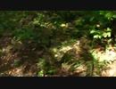 不可解な森 「いる。」~怖すぎる投稿映像13本~Vol.27