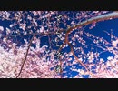 【初音ミク】桜染め【オリジナル】