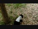 【脱走だーッ!(10】黒猫キキくん