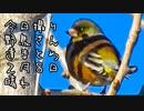 今日撮りの野鳥さん達まとめ2月8日晴れ