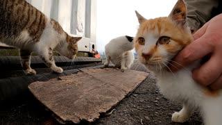 野良猫ピックアップシーン(チビ、ブルーアイ、駒五郎)
