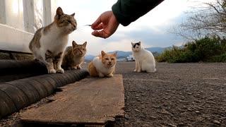 野良猫ちゃん、触らせてくれたのはイリコのお陰?その前は後進しながら逃げてったのに