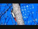 こどもの国、奈良川 今日撮りの野鳥さん達2月11日晴れ