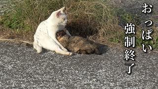 野良猫の親子愛(ピックアップシーン)