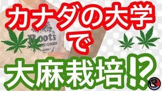 大学で大麻を栽培!?大麻ビジネスをしたい人必見!!
