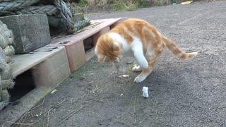 発泡スチロールと遊ぶ猫
