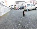 【脱走だーッ!17】黒猫キキくん