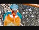 今日撮りの野鳥さん達まとめ2月13日小雨