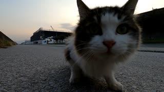 野良猫に餌係の人と勘違いされたが、生憎エサを持っていた僕
