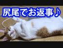 名前を呼ぶと尻尾で返事してくれるチビ【猫動画】