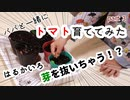 【幼稚園児が】パパと一緒にトマト育ててみた part3【抜いちゃう】