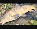 【釣り・рыбалка в японии(Токио・Парк Укима)】浮間公園で鯉...