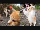 野良猫の子猫、遊ぶ茶トラと遊びたいキジトラ