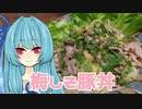 【1分弱料理祭】葵がつくる「梅しそ豚丼」【VOICEROIDキッチン】
