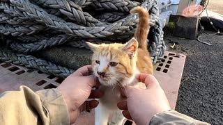 2月22日は猫の日だから野良猫に「ちゅ~る」をあげよう