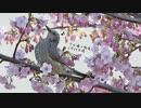 今日撮りの野鳥さん達まとめ2月24日晴れ