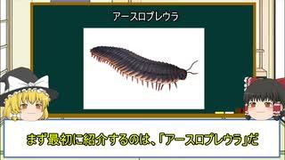 【ゆっくり解説】地球史上最大の節足動物