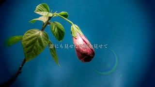 まちがいさがし / 菅田将暉 (Covered by